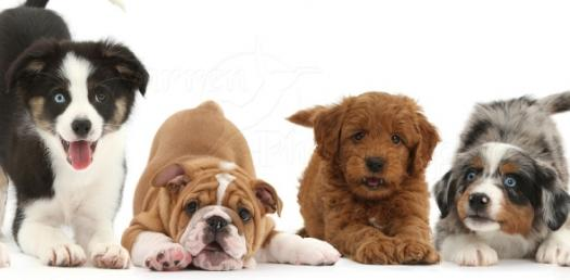 Dogs Are Awesome! Find Out What Kind Of Dog Are You With This Quiz.