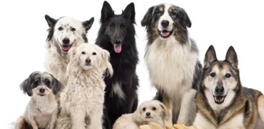 What Is The Best Dog For Me?