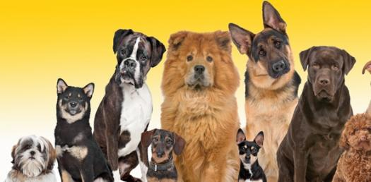 What Type Of Dog Are You?