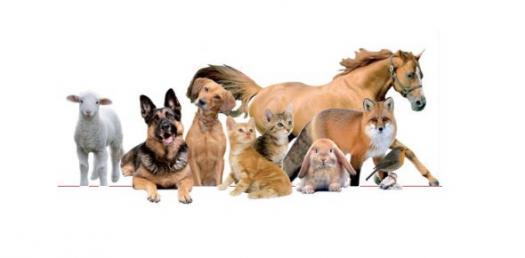 What Kind Of Pet Should I Get?