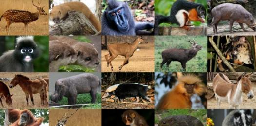 Test Your Knowledge On Animal - 4