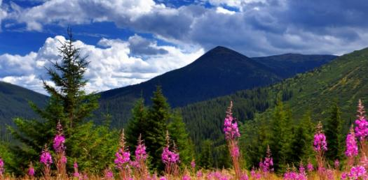 Learn About Natural Resources Quiz Questions