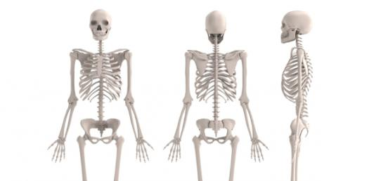 Quiz On Human Skeletal System