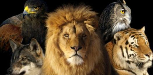 Power Animal Quiz