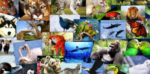 Some Animals In Plural Form
