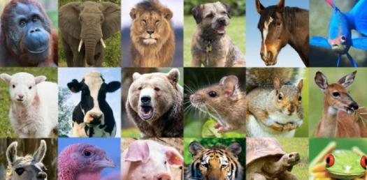 Animal Quizzes Online, Trivia, Questions & Answers