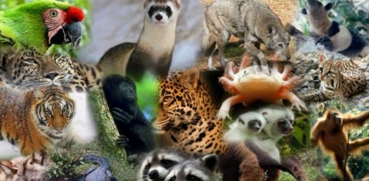 Animals And Their Characteristics: Quiz