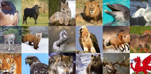 Animal Quizzes Online, Trivia, Questions & Answers - ProProfs Quizzes