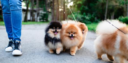 Best Pets To Have