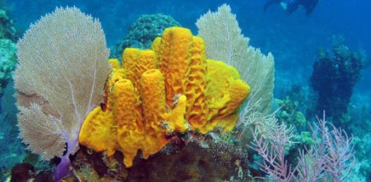 Sponge Quiz