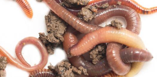 Phylum Annelida Quiz: Phylum Ctenophora!