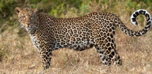Quiz: How Well Do You Know Leopard Blaze?