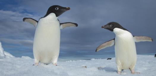 Greatest Penguins
