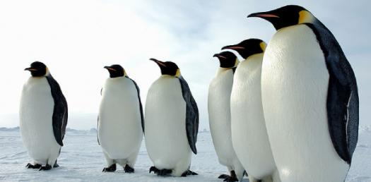 What Small Penguin Are You?