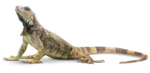 How Much Do You Know About Reptiles? Reptiles Trivia Quiz