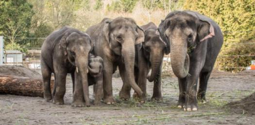 What Do You Know About World Elephant Day? Trivia Quiz