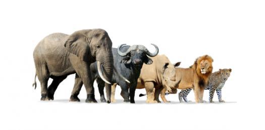 Interesting Animal Species Facts! Knowledge Trivia Quiz