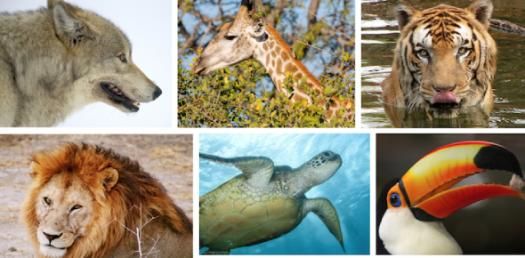 What Extremely Endangered Animal Are You?