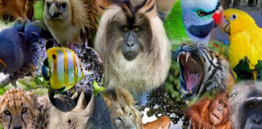 Do You Know About Endangered Species? Trivia Quiz
