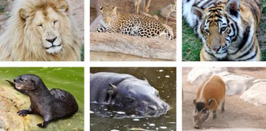 Environmental Wardens: Endangered Animals Facts! Trivia Quiz