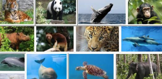 Endangered Species And Fisheries! Trivia Facts Quiz