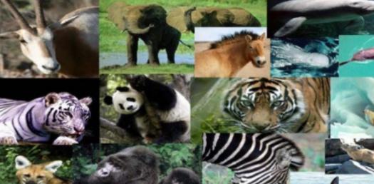 Endangered Sea Creatures! Trivia Facts Quiz