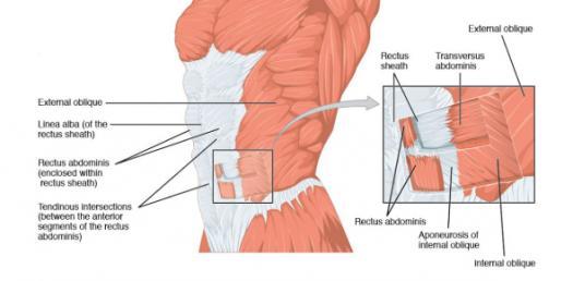 Visceral Peritoneum Trivia Questions! Quiz