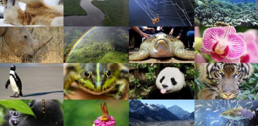 Loss Of Biodiversity Trivia Quiz