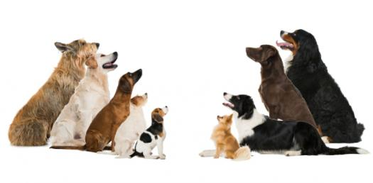 What Dog Breed Looks Most Like You?