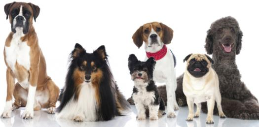 The Ultimate Dog Breed Selector Quiz!