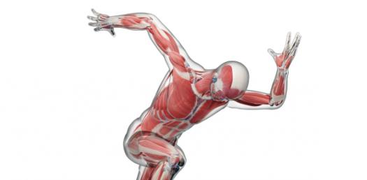 Biomechanics Ultimate Exam: Quiz!
