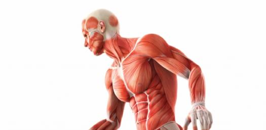 Anatomy And Physiology Quiz: The Cardiovascular System