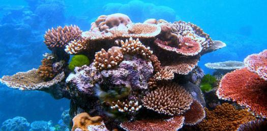 The Awareness Quiz On Coral Bleaching