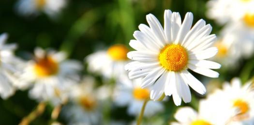 What Is My Birth Flower?