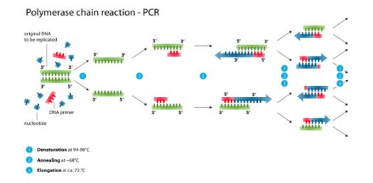 Quiz: Real-Time PCR