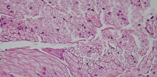 Quiz: Can You Identify The Name Of The Tissue?