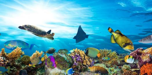 Fall In Love With Mother Nature - Know About Aquatic Ecosystems
