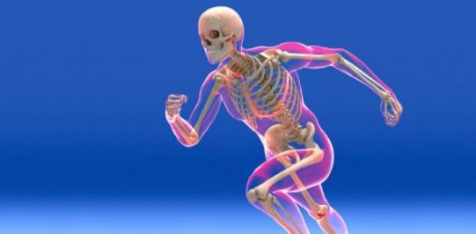Skeletal Exam Study Guide