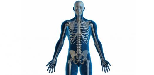 Skeletal System II Exam Prep Quiz!