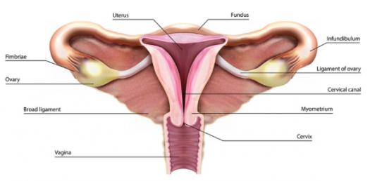 Best Quiz On Male & Female Reproductive System
