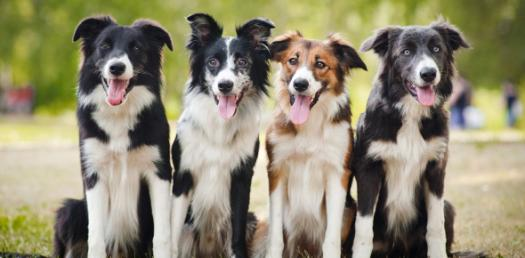 Are You Ready For A Dog? Find Out Here