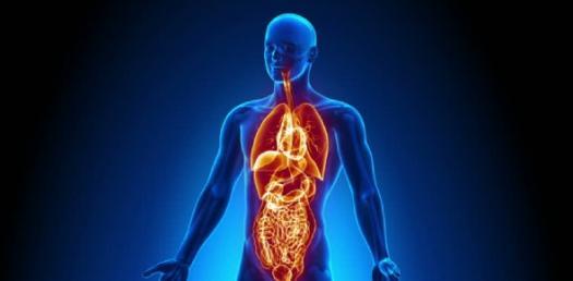 Quiz - Human Body Organs