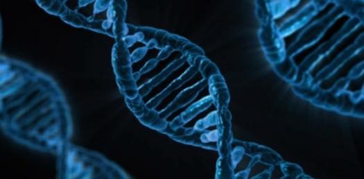 Transcription Quiz: Biology Trivia!