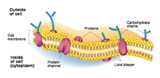 Biology Trivia Quiz On Cell Membrane