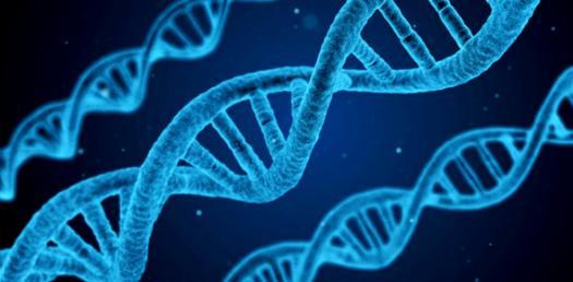 Principles Of Biology I - Exam II - Chapters 6, 7, 8