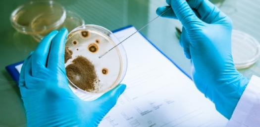 Trivia Questions On Microbiology Exam! Quiz