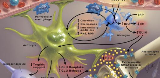 Renal Pathophysiology Inflammatory Processes Part 1