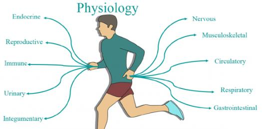 Dr Gawad Physiology Course Online Exams - Lecture 3 Exam (Parasympathetic Nervous System, Chemical Transmitters Exam)