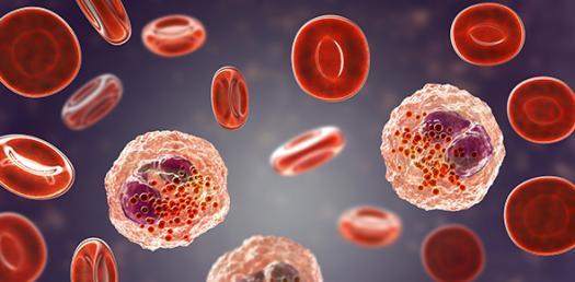 Tmh Hematology Quiz 2011