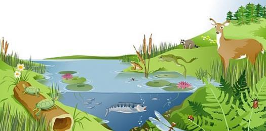 Botany 200 Ecosystem Ecology
